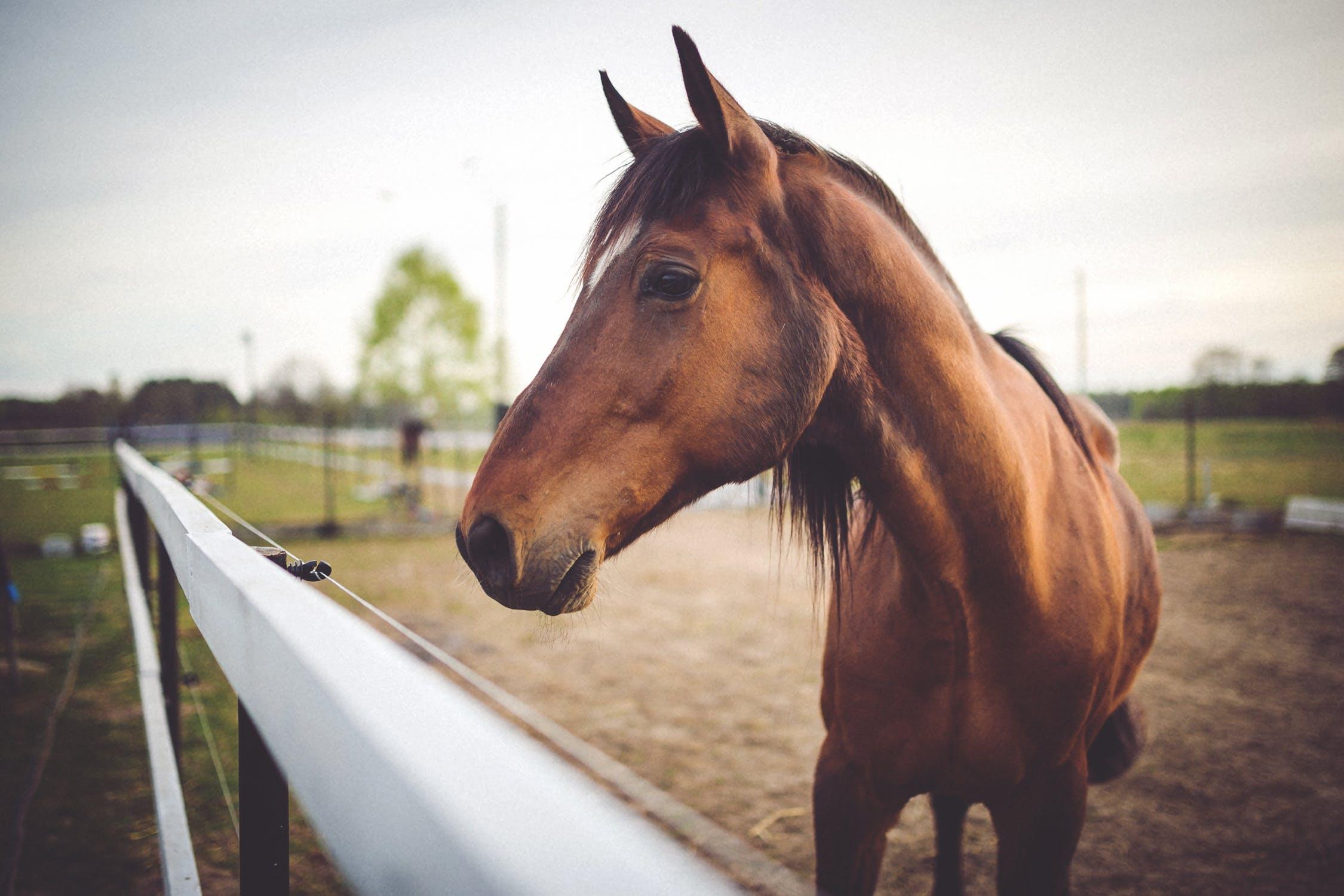 horse product copywriter