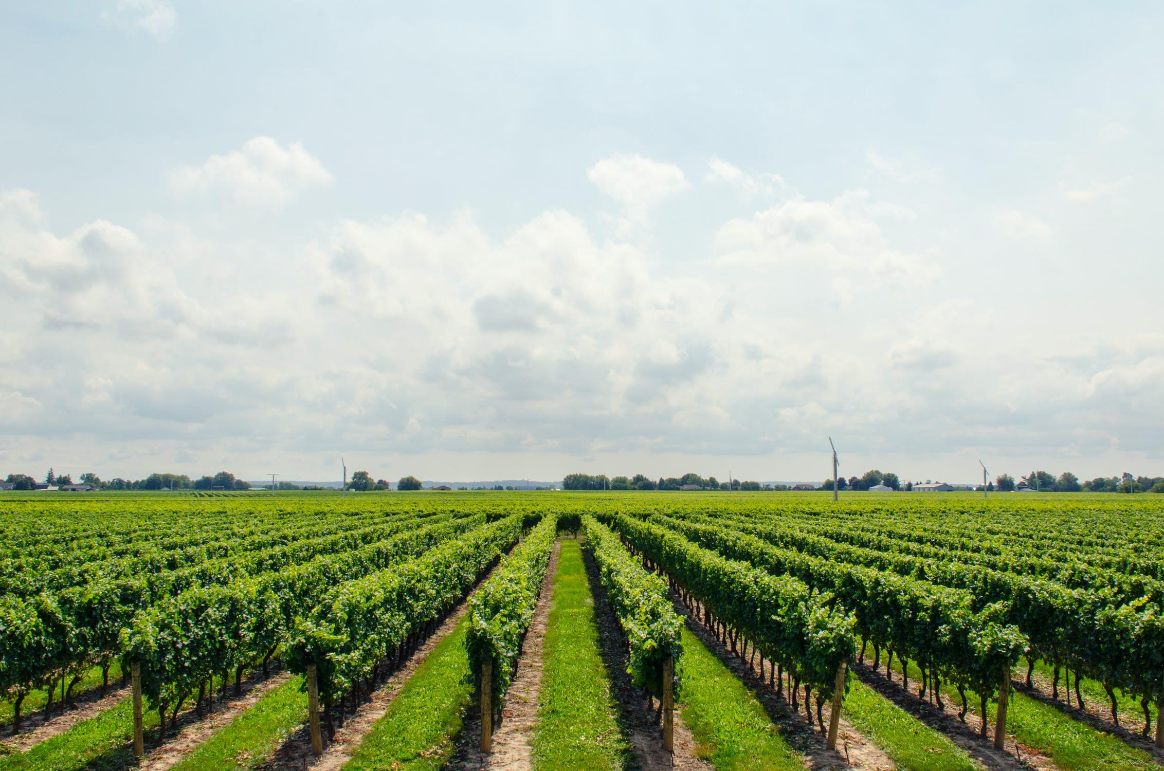 winery copywriting